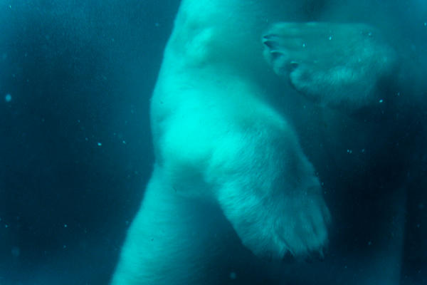 Underwater Bear by MariaKoch