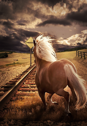 RIDE TO THE FREEDOM by NkDesignTGA