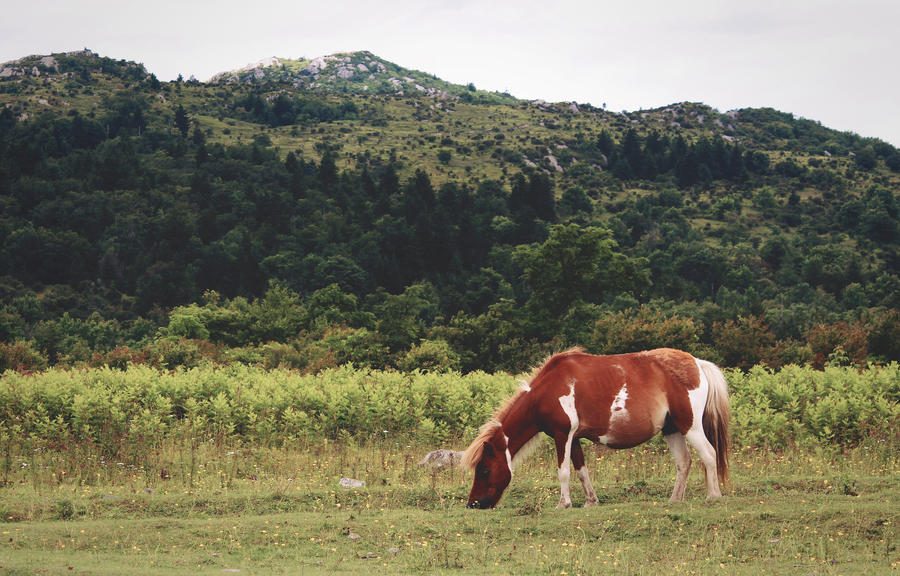 Paint pony at Grayson Highlands by mixtapes-of-love