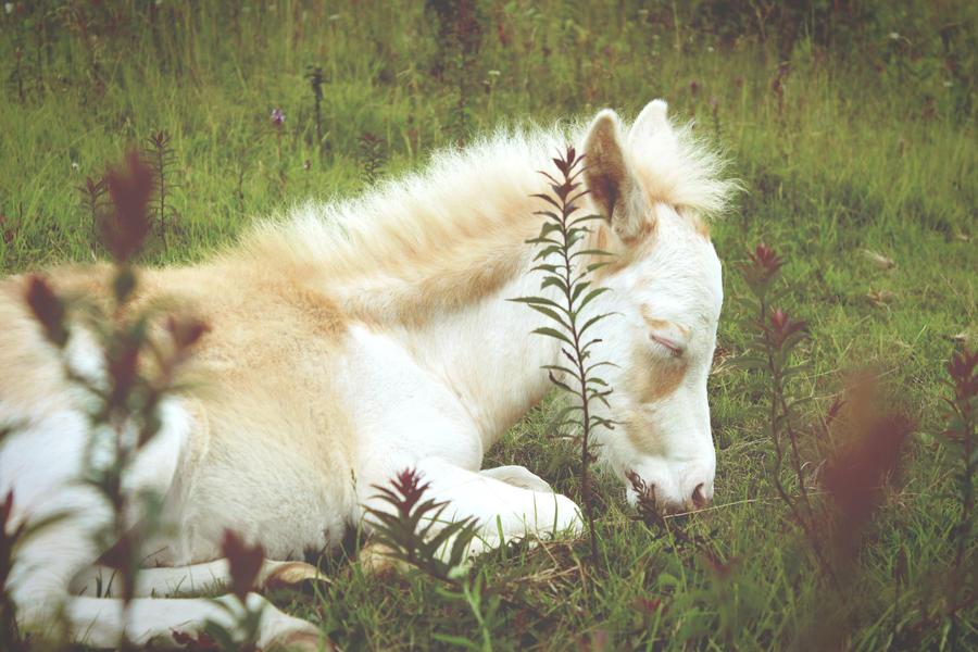 Foal II by mixtapes-of-love