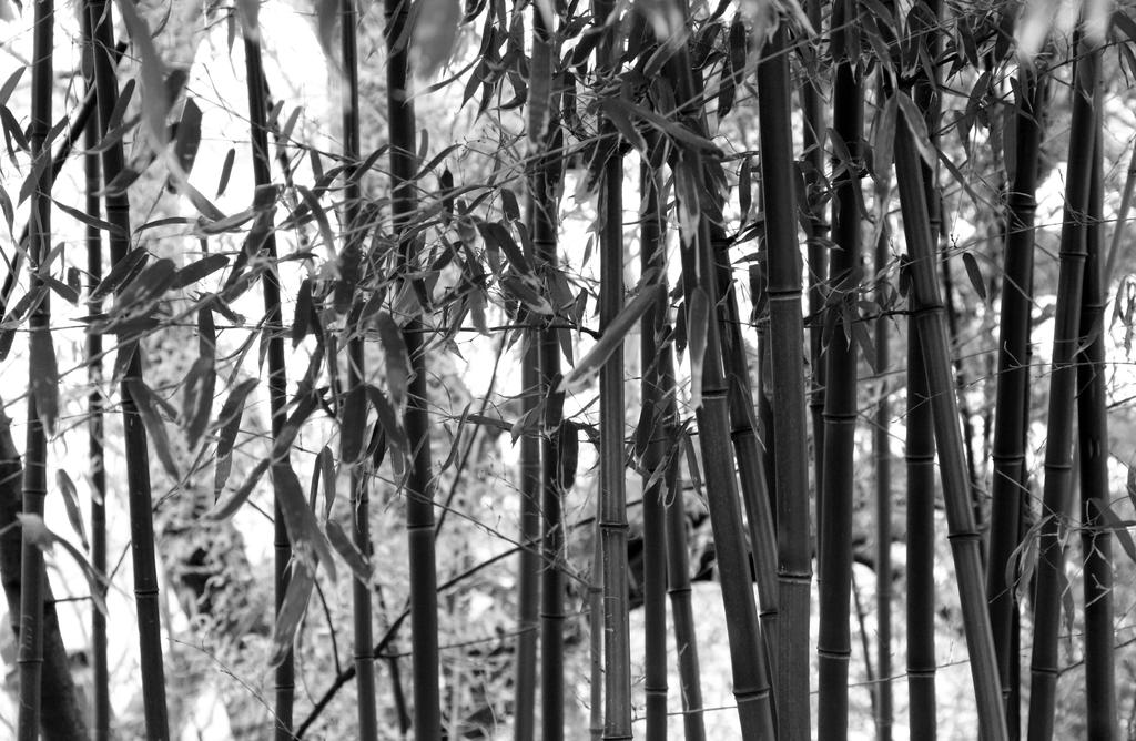 bamboo by wdhyeaney