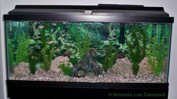 Freshwater Aquarium Decorating Ideas Images Pictures Becuo