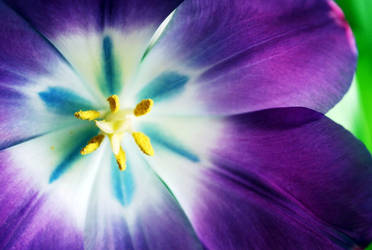 Flowers III by wzrdofozfan
