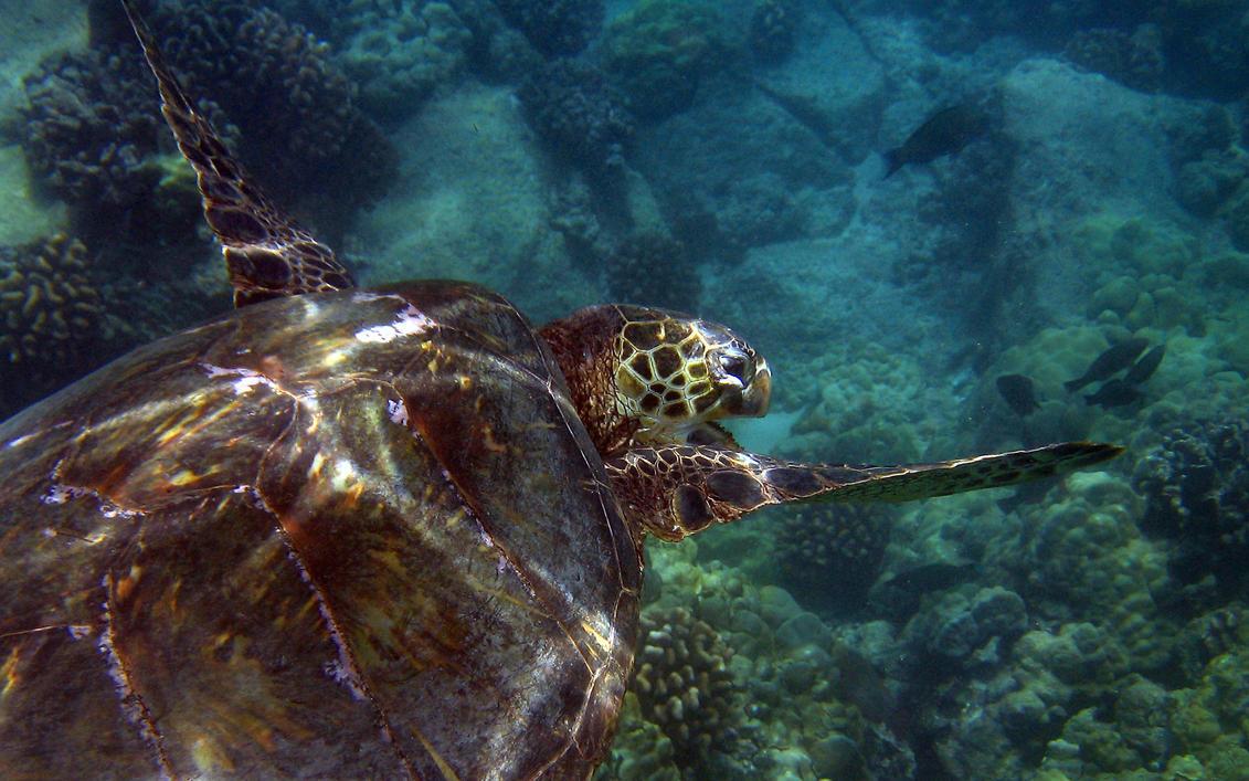 Turtle 4 by Krannichfeld