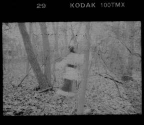 In the Woods No. 7