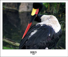 BIRD by sedge