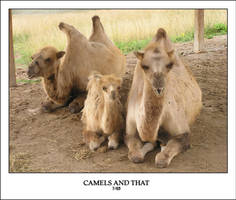 CAMELS AND THAT by sedge