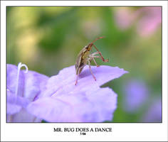 MR. BUG DOES A DANCE by sedge