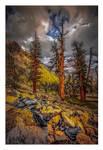 Sequoia Ridge II