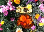 Bee Reliquary 5