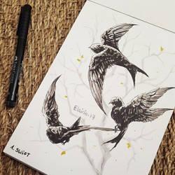 Inktober - Day 01: Swift by Elairin