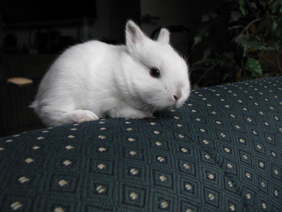 Cute White Baby Rabbits Baby Rabbit Day 16 White by