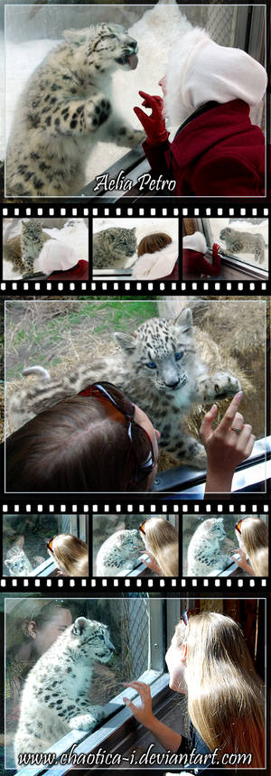 Snow Leopard Cub ID - Updated