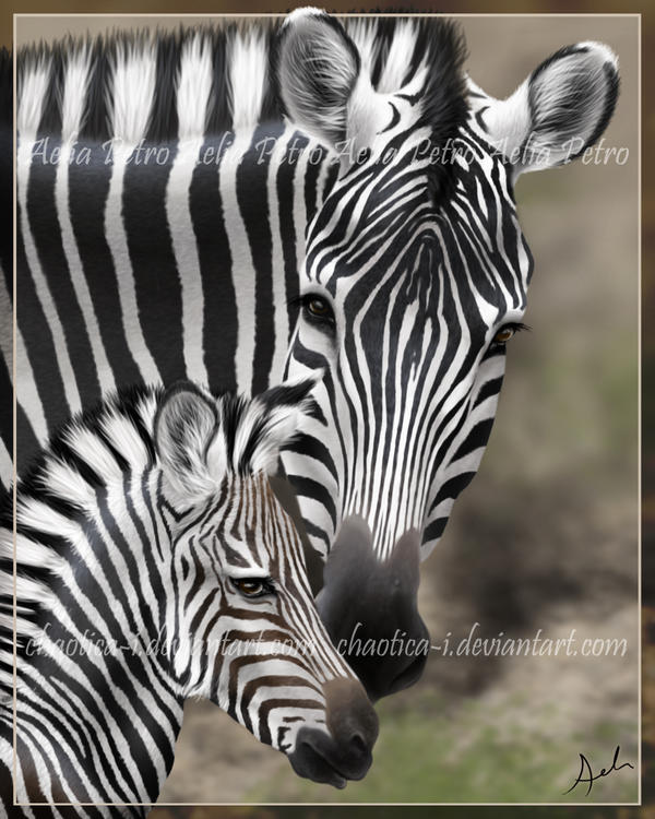 Zebras Paintings Zebra Mother and Foal Painting
