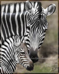 Zebra Mother and Foal Painting