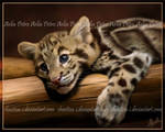 Clouded Cub Painting by Chaotica-I