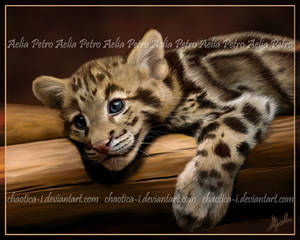 Clouded Cub Painting