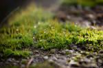 Moss (Mahovina)