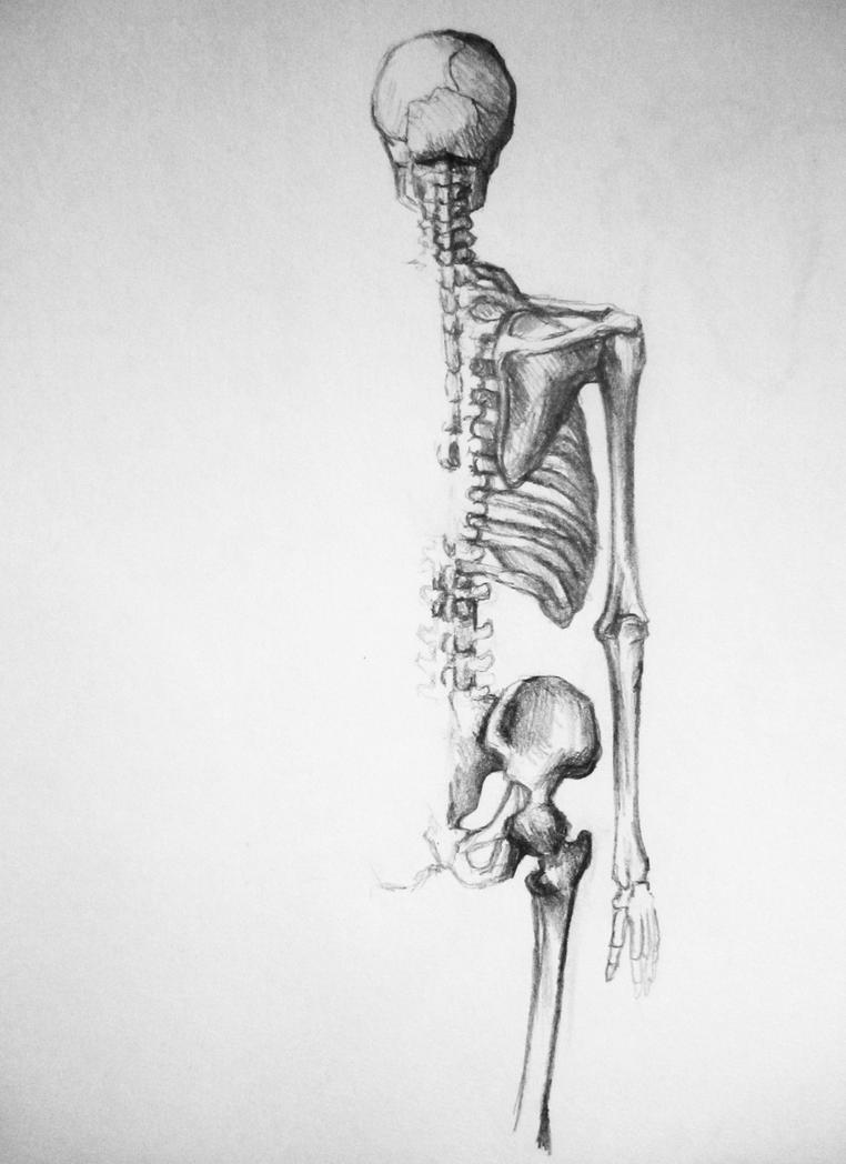 Back skeletal anatomy