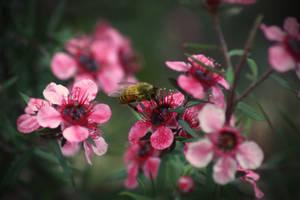 Unoriginal Bee on a Flower Shot
