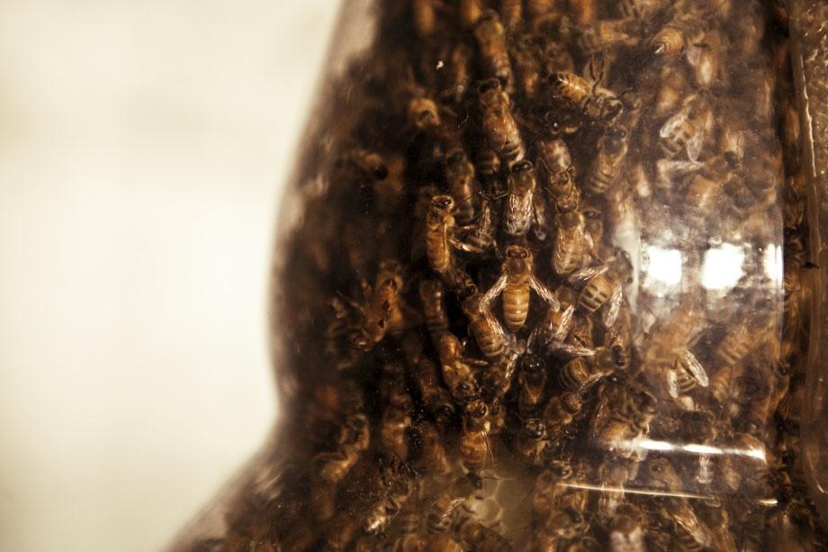 Dewars-honey-bees-09 by danlev