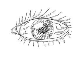 Continuous Line Challenge: Eyeball by danlev