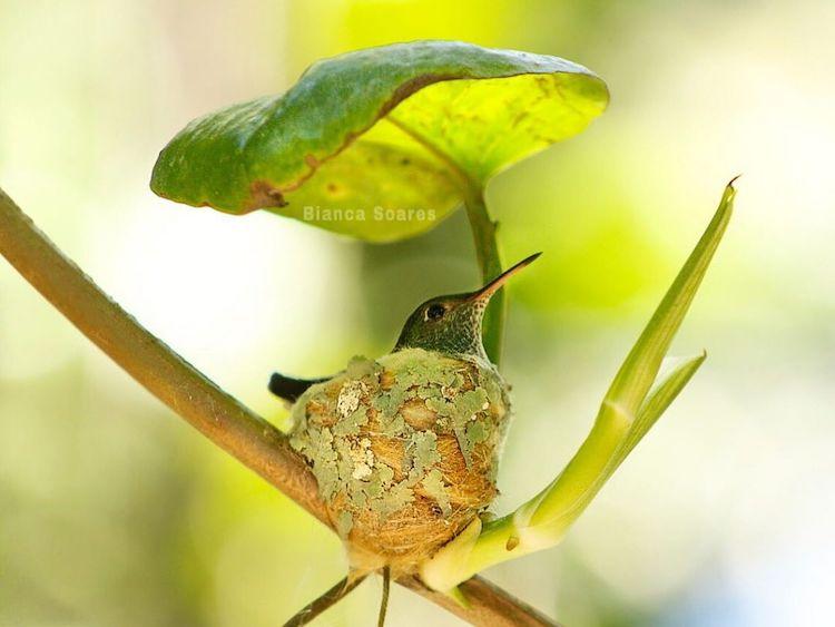 Hummingbird-nest-bianca-caroline-soares-1