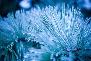 Snow Urchin 2 by danlev