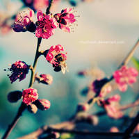 bee on blossom by ntpdang