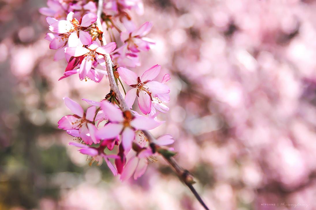 Fragrant Memories by ntpdang