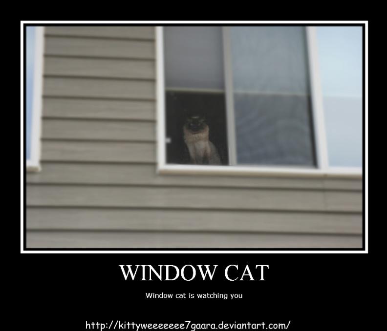 Window cat by LeonKSpiderKitty