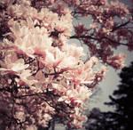 flowers II. by lia-minou