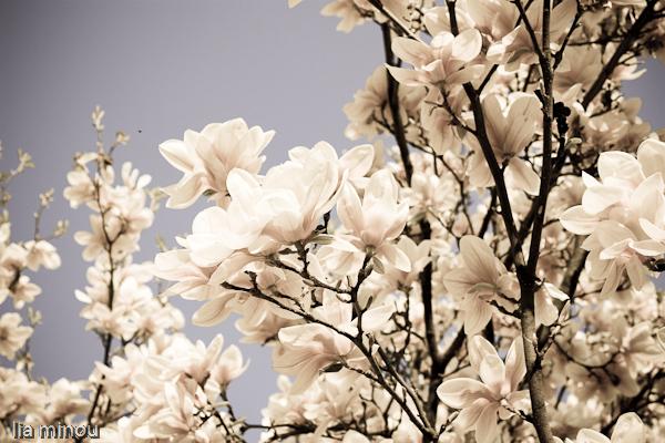flowers III. by lia-minou