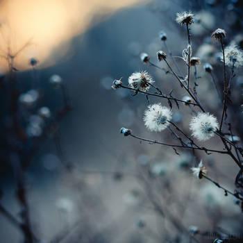 cold love by lia-minou