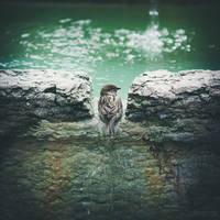 thegate by lia-minou