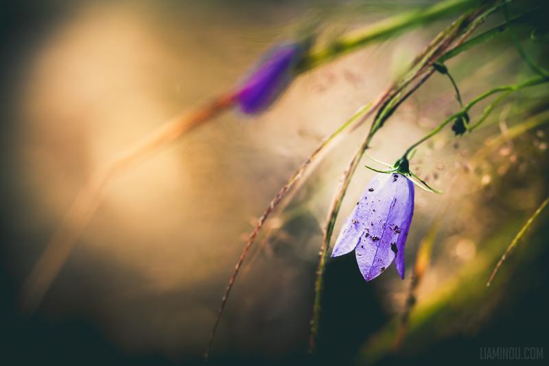 hidden by lia-minou