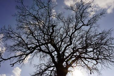 Fruehlingsbaum02 by Noirbert