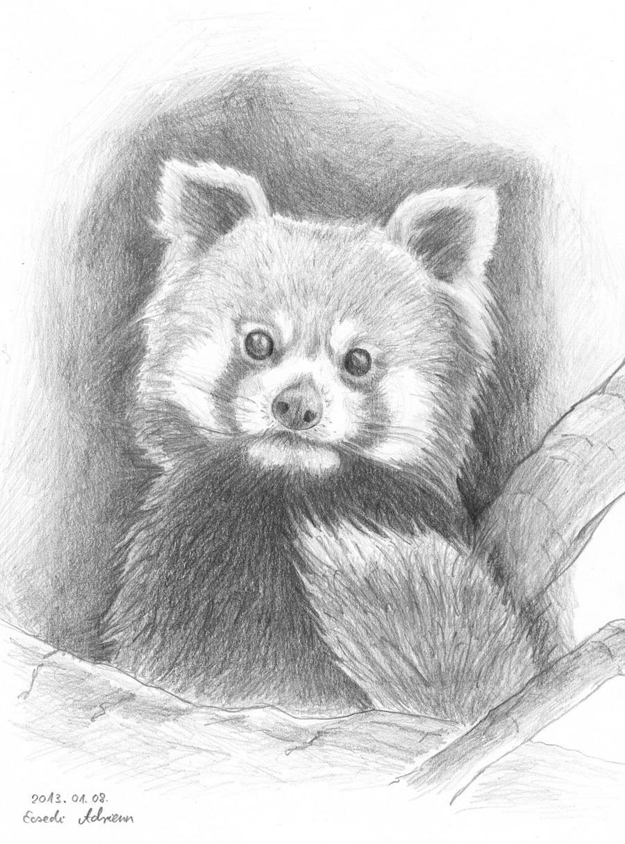 Red panda by AdriennEcsedi on DeviantArt