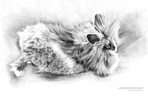 Fluffy bunny drawing by AdriennEcsedi