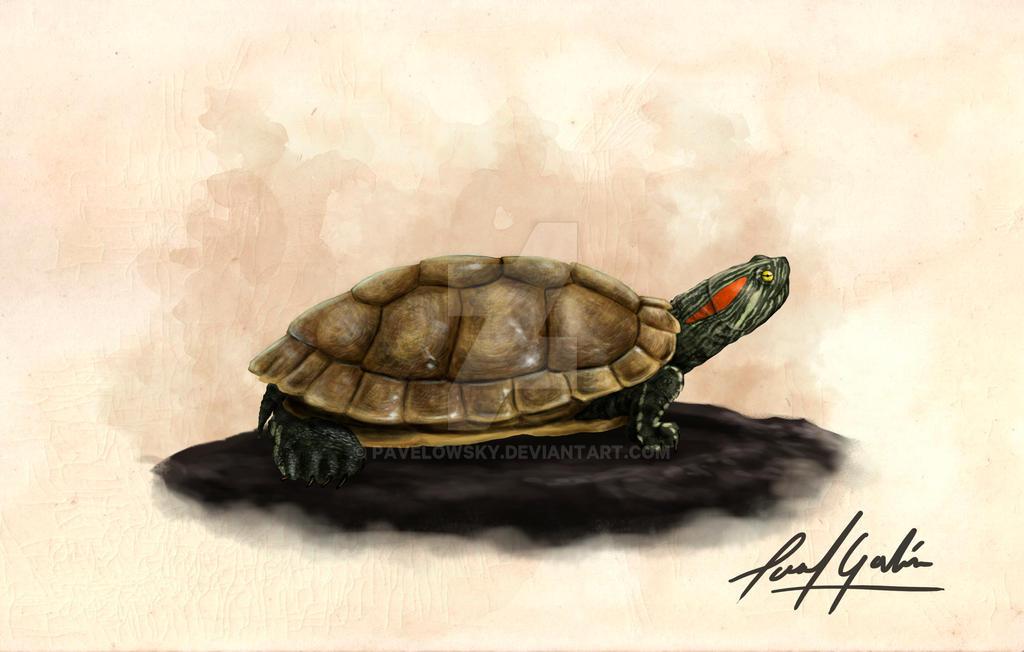 tortuga tigre by PAVELOWSKY