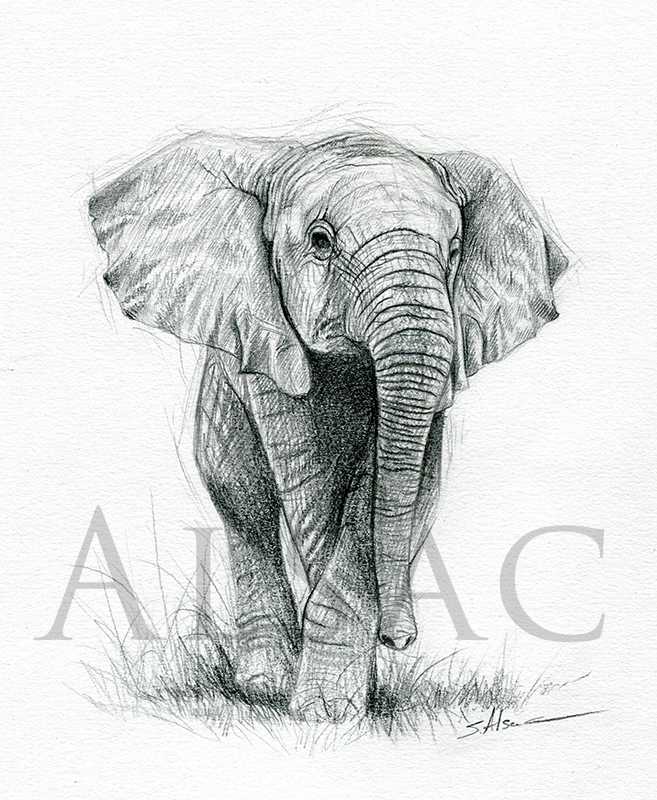 baby elephant drawing by lepastyman on DeviantArt