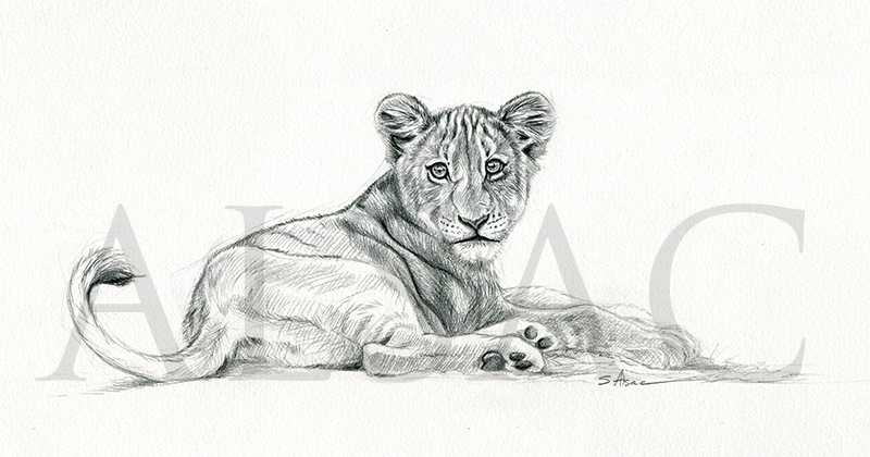 Lion cub drawing by lepastyman on deviantart - Dessin lionceau ...