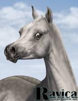Arabian portrait by Ravica