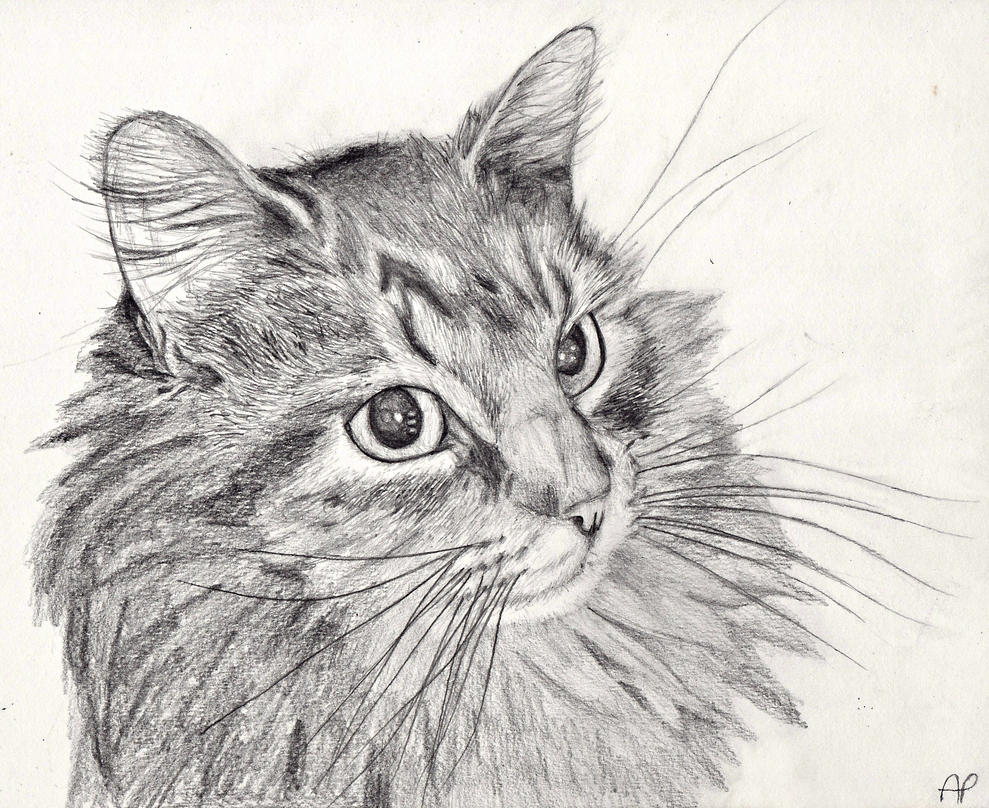 Cat Pencil Drawing by Mintimelon on DeviantArt
