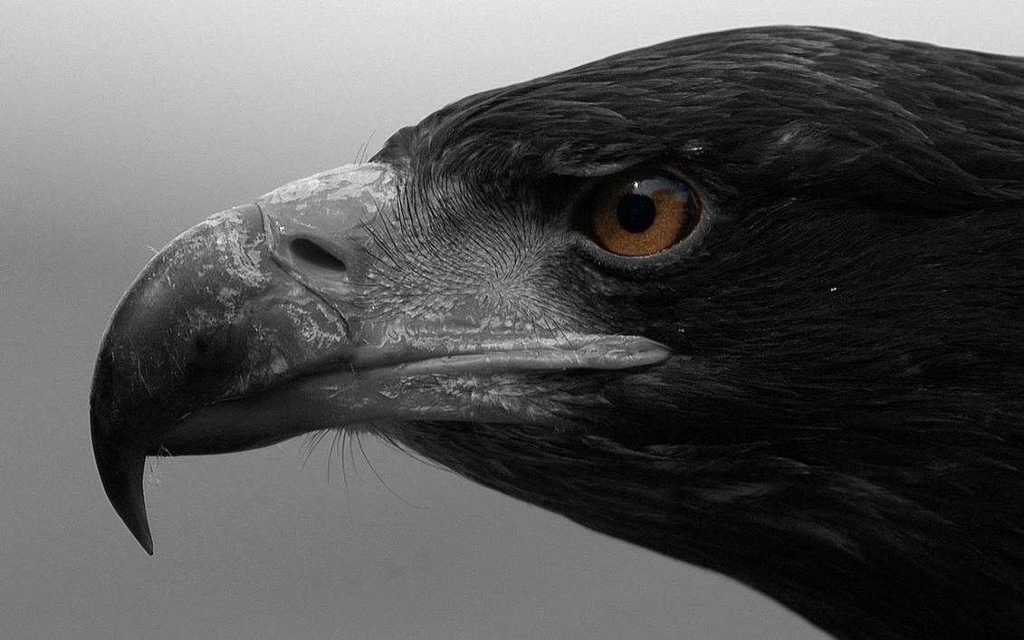 Eagle's eye by MeGustaDeviantart