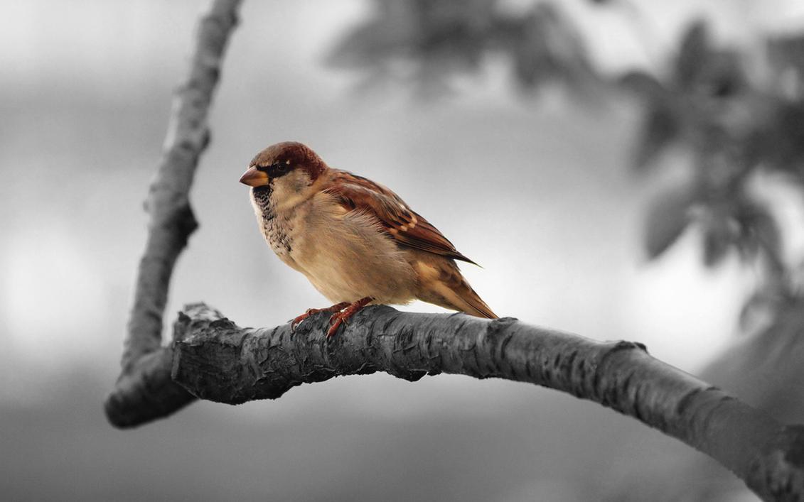 Sparrow by MeGustaDeviantart