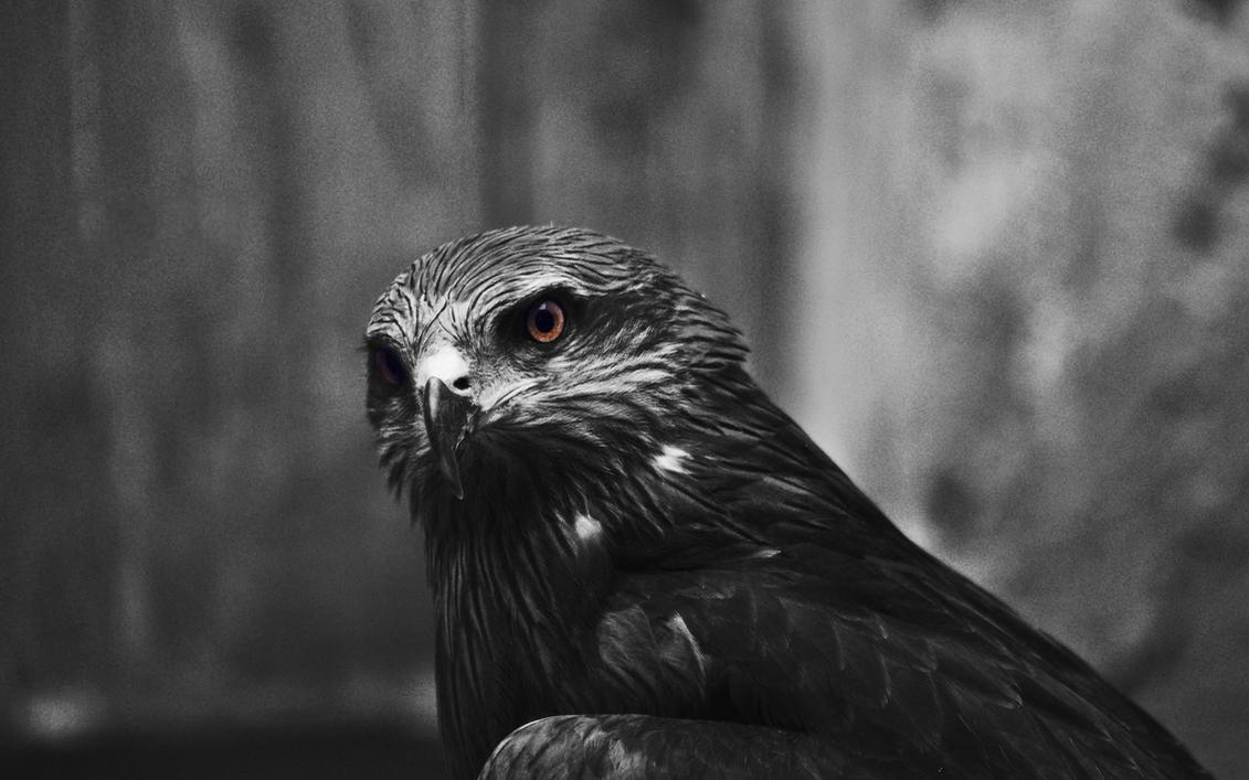 Hawk's eyes by MeGustaDeviantart