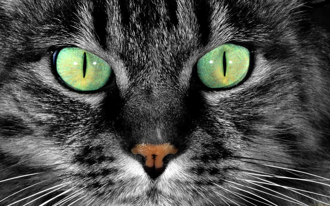 Cat's Eyes by MeGustaDeviantart