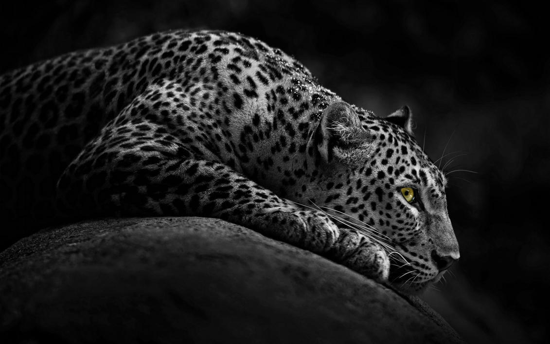 Jaguar's Eye by MeGustaDeviantart