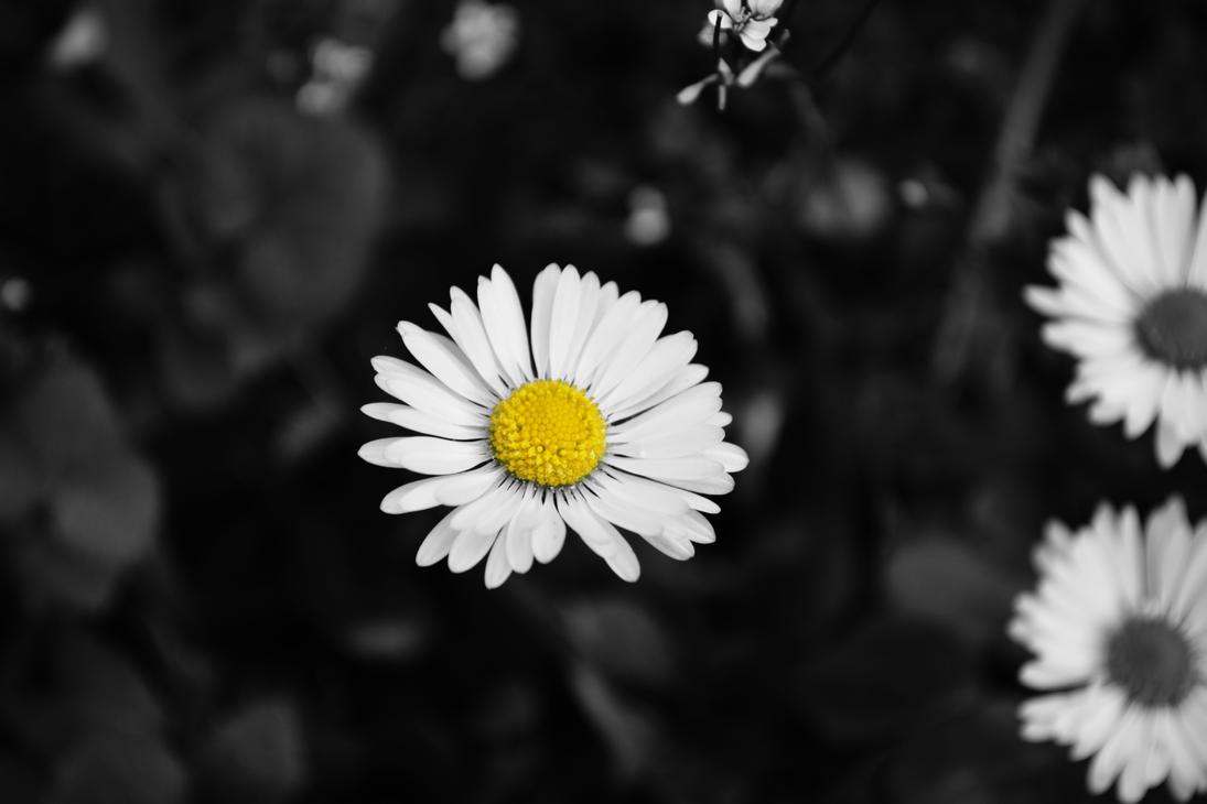 Yellow by MeGustaDeviantart